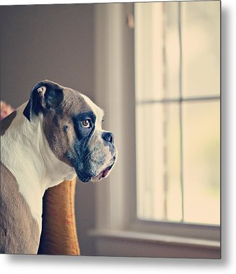 Boxer Dog Metal Print by Laura Ruth