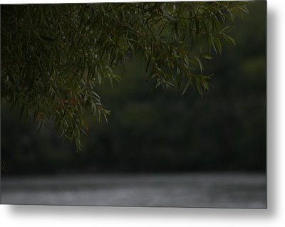 Branches Over Water Metal Print by Static Studios