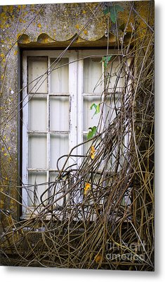 Branchy Window Metal Print by Carlos Caetano
