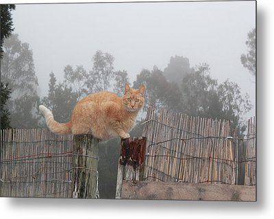 Bridging Cat Metal Print by Ron McMath