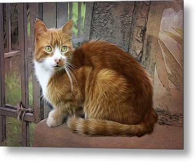 Bright Eyes Metal Print by Tilly Williams