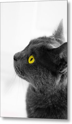 Bright Eyes Metal Print by Vincent  Dale