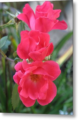 Bright Pink Roses Metal Print by Michaline  Bak