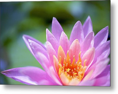 Bright Pink Water Lily II Metal Print by Kicka Witte