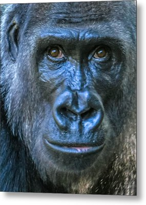 Brown Eyes Metal Print by Brian Stevens