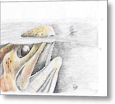 Brown Trout  Metal Print by H C Denney