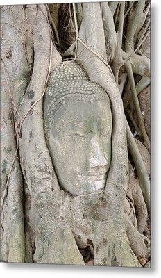 Buddha Head In A Tree Metal Print by Kanoksak Detboon