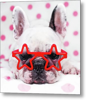 Bulldog With Star Glasses Metal Print by Retales Botijero