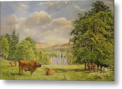 Bulls At Balmoral Metal Print by Tim Scott Bolton