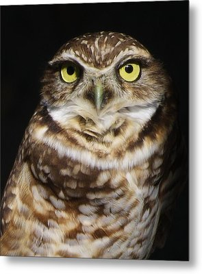 Burrowing Owl Metal Print by Paulette Thomas