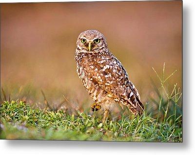 Burrowing Owl Metal Print by TNWA Photography
