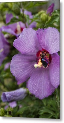 Busy Bee Metal Print by Peter Chilelli
