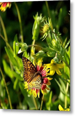 Butterfly And Blankets I Metal Print by James Granberry