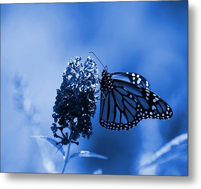 Butterfly In Blue Metal Print by Angie Tirado