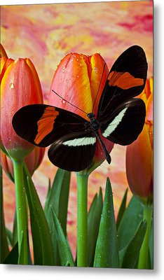 Butterfly On Orange Tulip Metal Print by Garry Gay