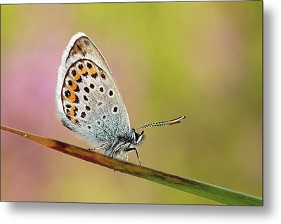 Butterfly Metal Print by Stefady