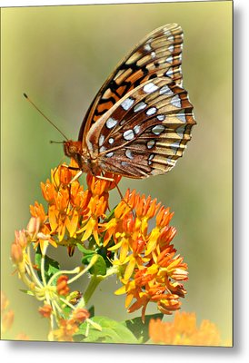 Butterfly Weed 1 Metal Print by Marty Koch