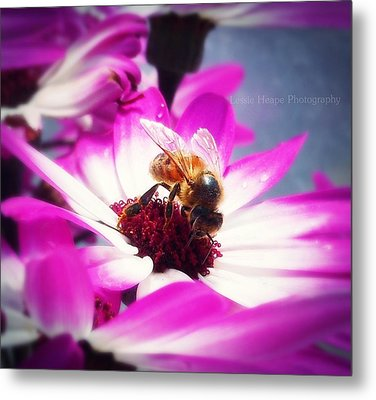 Buzz Wee Bees Ll Metal Print by Lessie Heape