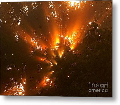 By The Dawns Early Light Metal Print by Marjorie Imbeau