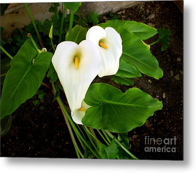 Cala Lily Metal Print by The Kepharts