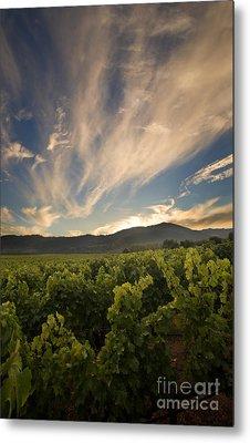 California Vineyard Sunset Metal Print by Matt Tilghman