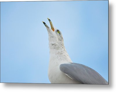 Call Of The Wild Metal Print by Bill Cannon