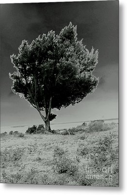 Calms Metal Print by Amy Sorrell