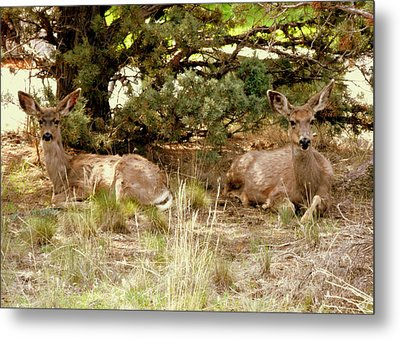 Camouflaged Metal Print by Cindy Wright