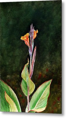 Canna Lily Metal Print by Irina Sztukowski