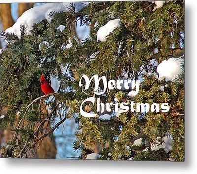 Cardinal Christmas Card Metal Print by Aimee L Maher Photography and Art Visit ALMGallerydotcom