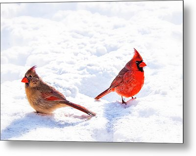 Cardinal Couple Metal Print by Tamyra Ayles