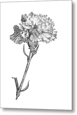 Carnation Metal Print by Christy Beckwith