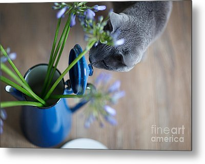 Cat And Flowers Metal Print by Nailia Schwarz