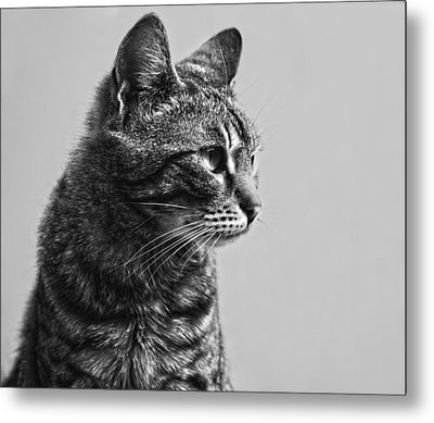 Cat Metal Print by Chelaru Catalin Ionut