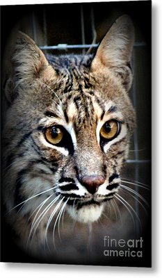 Cat Fever Metal Print by Kathy  White