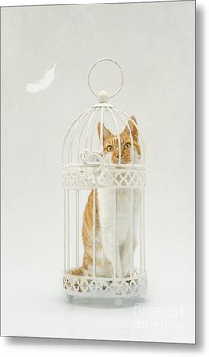 Cat In A Birdcage Metal Print by Catherine MacBride