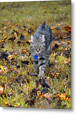 Cat In Autumn Metal Print by Susan Leggett