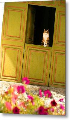 Cat On A Dutch Door Metal Print by Emanuel Tanjala