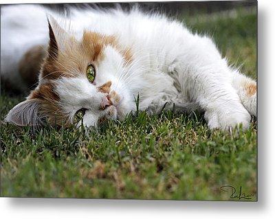 Cat On The Grass Metal Print by Raffaella Lunelli