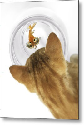 Cat Peering Into Fishbowl Metal Print by Darwin Wiggett