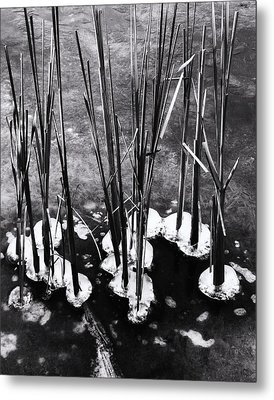 Cat-tails In Ice Metal Print by Todd Sherlock