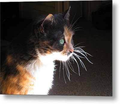 Cat Whiskers Metal Print by Sue Halstenberg