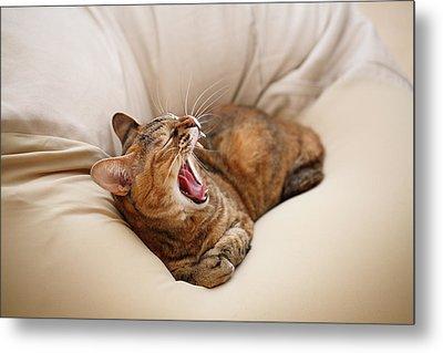 Cat Yawn On Bed Metal Print by Junku