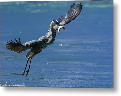 Catch Of The Day Metal Print by Sebastian Musial