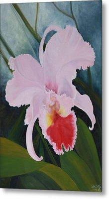 Cattleya Orchid Metal Print by Don  Goetze