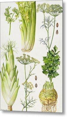 Celery - Fennel - Dill And Celeriac  Metal Print by Elizabeth Rice