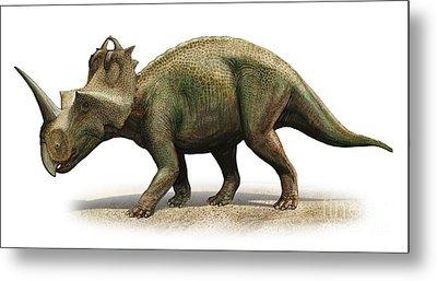 Centrosaurus Apertus, A Prehistoric Era Metal Print by Sergey Krasovskiy