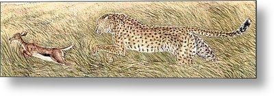 Cheetah And Gazelle Fawn Metal Print by Tim McCarthy