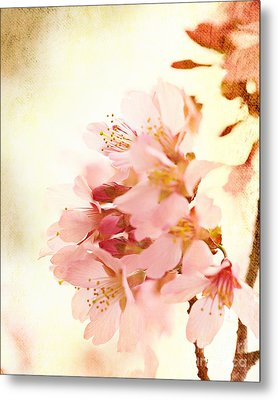 Cherry Blossom Metal Print by Kim Fearheiley