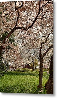 Cherry Blossoms Washington Dc 5 Metal Print by Metro DC Photography